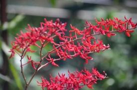 Singapore Botanical Gardens.jpg
